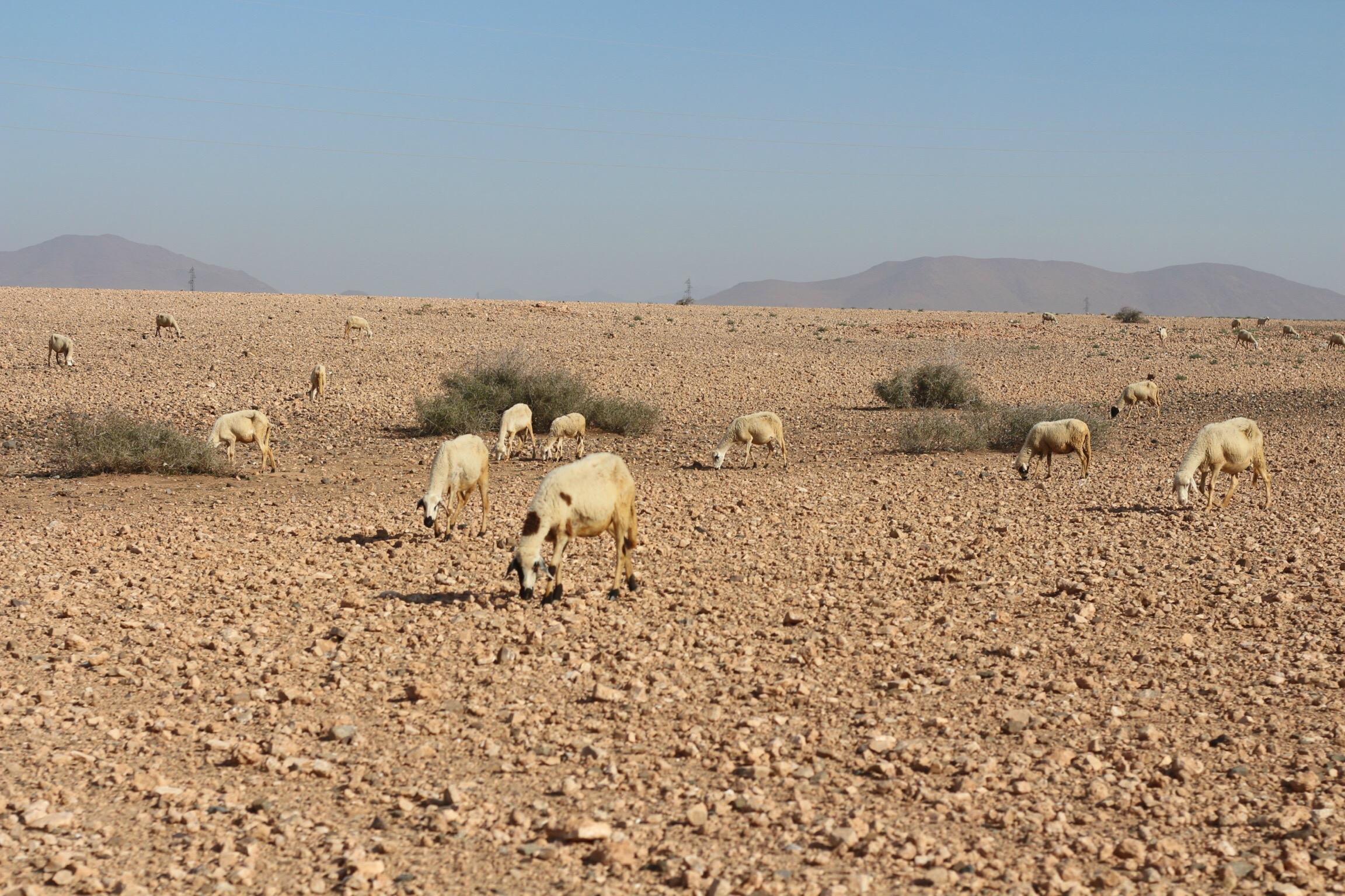 Trysha Gaba - Buggy à Marrakech avec Dunes & Déserts 2