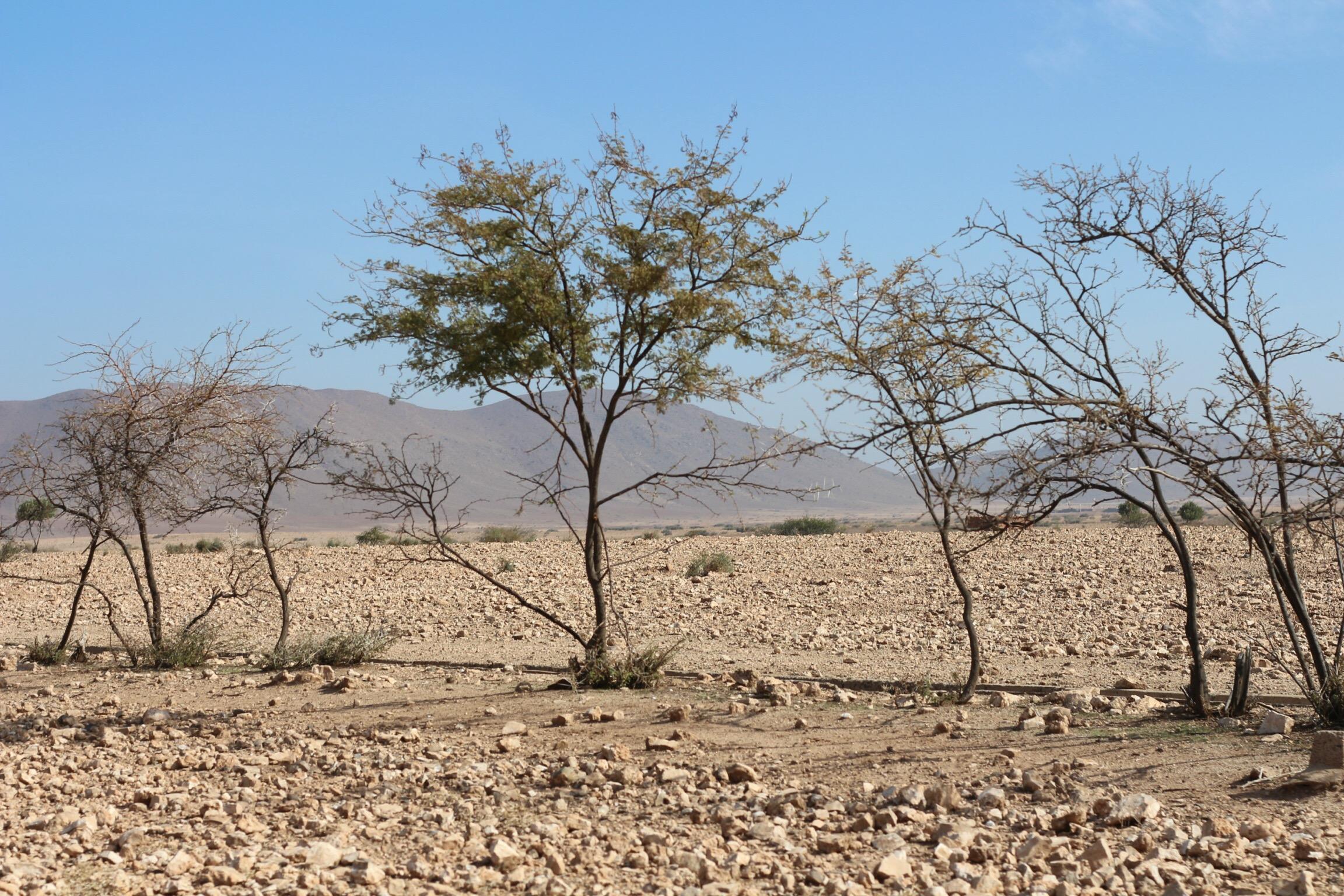 Trysha Gaba - Buggy à Marrakech avec Dunes & Déserts 5