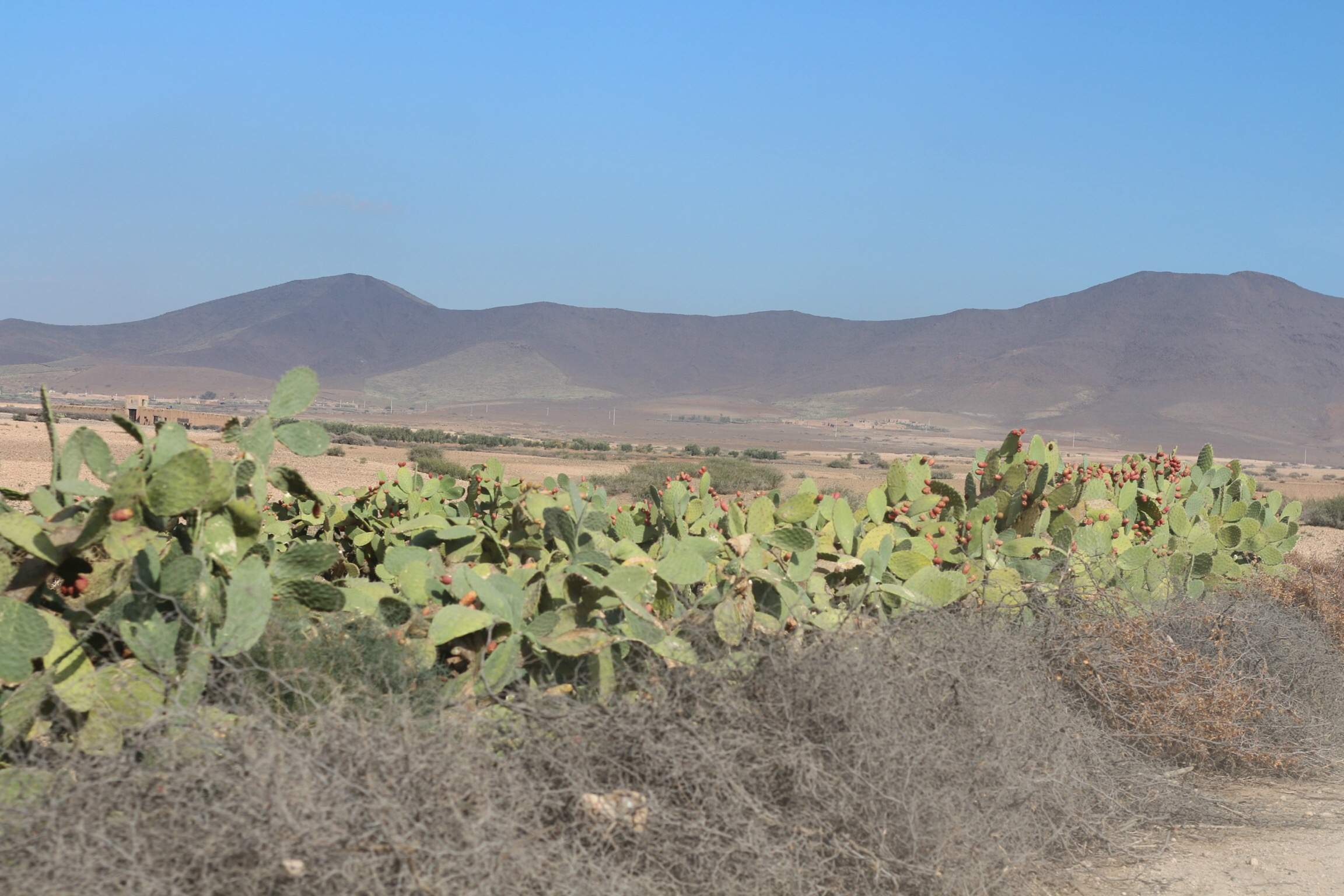 Trysha Gaba - Buggy à Marrakech avec Dunes & Déserts 3